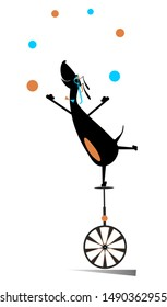 Equilibrist dog rides on the unicycle and juggles the balls illustration. Funny dachshund balances on the unicycle and juggles the balls isolated on white illustration