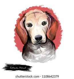 Estonian Hound dog digital art illustration isolated on white background. Estonia origin hunting dog. Non-recognized standard breed. Cute pet hand drawn portrait. Graphic clipart design for web, print
