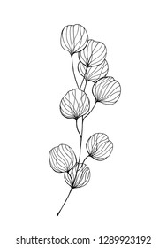 Eucaliptus branches line hand drawn ink illustration