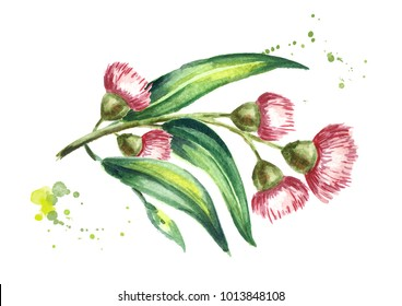 Eucalyptus branch with leaves and red flowers. Isolated on white background. Watercolor hand drawn illustration