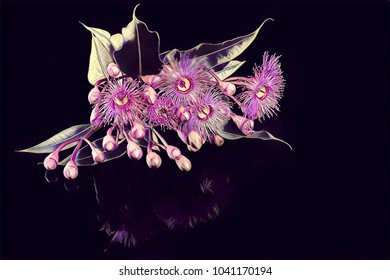 Eucalyptus flowers with buds and leafs - creative illustration
