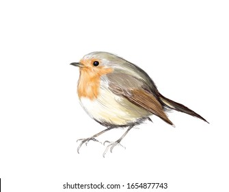 European robin, cute small bird on white background, freehand realistic drawing of single songbird