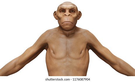 Evolution Homo Erectus Man