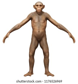 Evolution Homo Erectus Man 3D Portrait