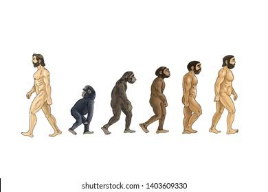 evolutionary theory of cartoon illustration