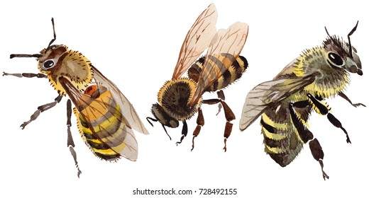 dea9321b7 Exotic bee wild insect in a watercolor style isolated. Full name of the  insect:
