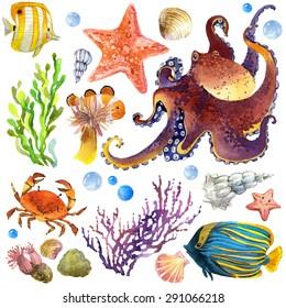 exotic Fish, coral reef, algae, unusual sea fauna, sea shells, anemones and decoration marine theme. underwater world set. watercolor illustration for children