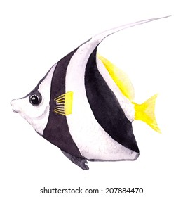 Exotic fish (tropical bannerfish). Watercolor