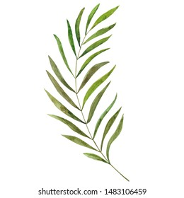 exotic green tropical leaves, jungle tree, brazil tropic borany elements. watercolor illustration on isolated white background, jungle clipart. Perfect for fabric design.