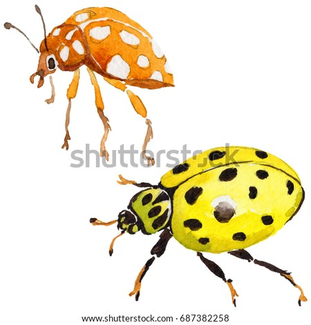 12ec435f535a5 Exotic ladybug wild insect in a watercolor style isolated. Full name of the  insect: