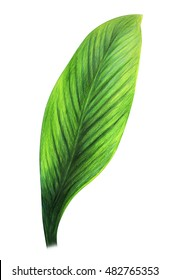 Colored Pencil Drawing Exoticl Leaf Hd Stock Images Shutterstock