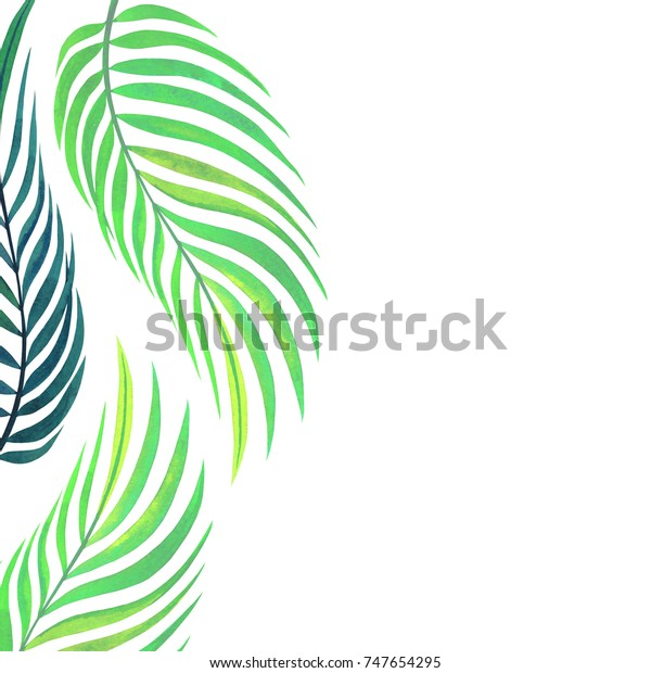 Exotic Plants Background Frame Design Leaves Stock Illustration 747654295 Portrait of creative nature layout made of tropical leaves isolated on white background with copy space. https www shutterstock com image illustration exotic plants background frame design leaves 747654295
