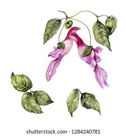 Exotic and rare parrot flower (Impatiens psittacina) isolated on white background. Beautiful tropical floral set (parrot flower, and leaves). Watercolor painting. Hand drawn botanical illustration.