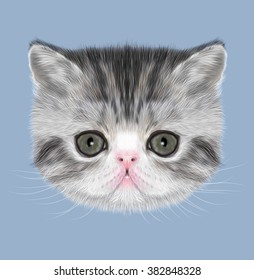 Exotic Shorthair Kitten Illustrated Portrait Of Black Tabby On Blue Background