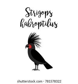 Exotic tropical bird isolated on white background. Strigops habroptilus parrot bird element with hand drawn inscription