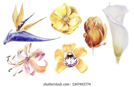 Exotic Tropical Flowers on a Transparent Background. Calla Lily Flower, Anemone, Orchid, Magnolia, Strelizia. Animal Print. Texture skin