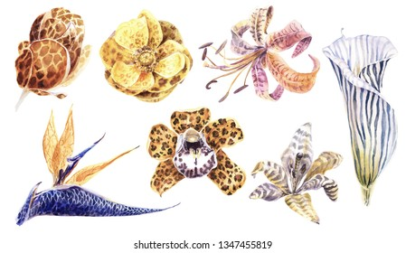 Exotic Tropical Flowers on a Transparent Background. Calla Lily Flower, Anemone, Strelizia, Orchid, Magnolia. Animal Print. Texture skin