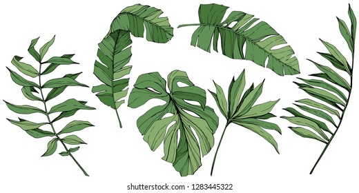 Exotic tropical hawaiian summer. Palm beach tree jungle botanical leaves. Green engraved ink art. Leaf plant botanical garden floral foliage. Isolated leaf illustration element.