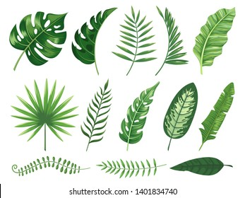 Exotic tropical leaves. Monstera plant leaf, banana plants and green tropics palm leaves. Jungle palms forest flora nature tropic leaves isolated  illustration icons set