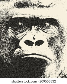 Expressive face of gorilla male, severe silverback. The great ape, most dangerous and biggest monkey of the world. Great for user pic, icon, label or tattoo. Amazing illustration in grunge style.