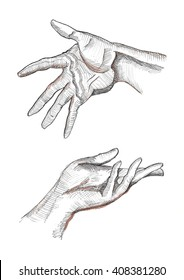 Expressive left and right human hands with visible palm creases, fingers, tendons, muscles. Pencil, ink and watercolor sketch drawing.