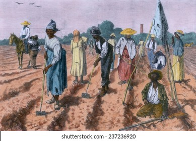 Ex-slaves working in a gang on a cotton plantation with a nearby overseer in 1875 ten years after emancipation, 1875 wood engraving with modern color.