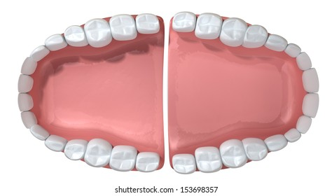 An extreme closeup of a set of open false human teeth set in pink gums on an isolated background