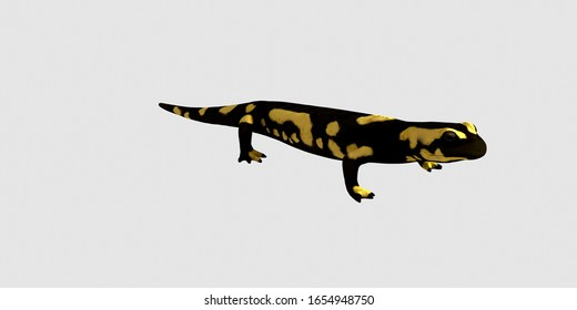 Extremely detailed and realistic high resolution 3d image of a fire salamander. Isolated on white background