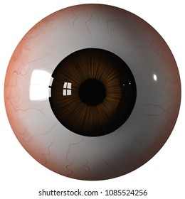eyeball brown isolated on white background, Front view 3d render