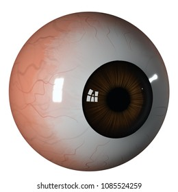 eyeball brown isolated on white background, Side view 3d render