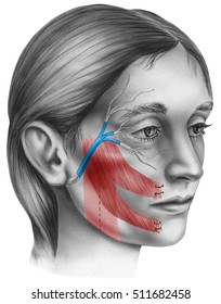 Face - frozen face surgery to restore movement in patients with facial paralysis caused by nerve damage.