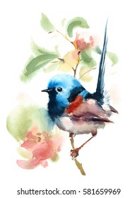 Fairy Wren Bird On a Branch with Flowers Watercolor Hand Drawn Summer Illustration isolated on white background