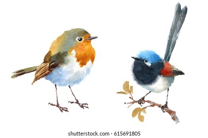 Fairy Wren and Robin Two Birds Watercolor Hand Painted Illustration Set isolated on white background