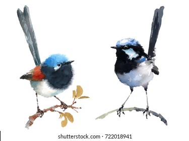 Fairy Wrens Two Birds Watercolor Hand Painted Illustration Set isolated on white background