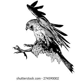 FALCON BIRD  INK