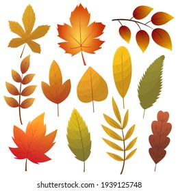 Fall leaf collection. Set of autumn leaves, isolated on white background. Simple cartoon flat style,  illustration. Multicolor autumn leaves flat  icons