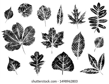 Fall leaves set. Imprints. Stamps of the leaves