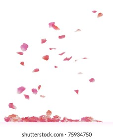 Falling rose petals. 3d rendering isolated on white background.