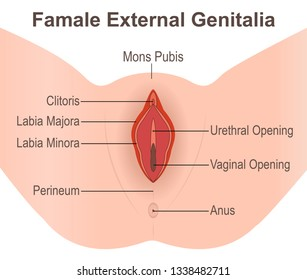Famale External Genitalia