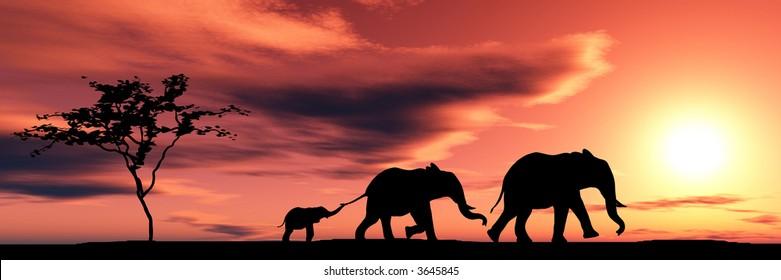 Family of elephants