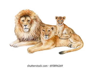 Family of lions isolated on white background. Father, mother, child. The lion, the lioness, the lion cub. Watercolor. Illustration. Template. Drawing