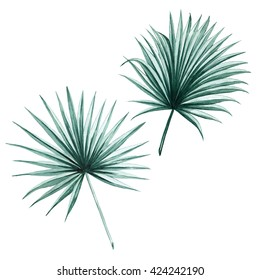 Fan palm green leaves tropical exotic watercolor  botany spring summer Hawaii beach , design object print textile backdrop,wallpaper isolated on white background