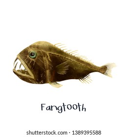 Fangtooth fish realistic illustration painting