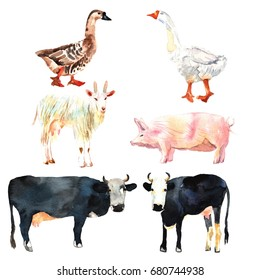 Farm animal set drawing in watercolor. Cow, duck, goat, pig for your design.