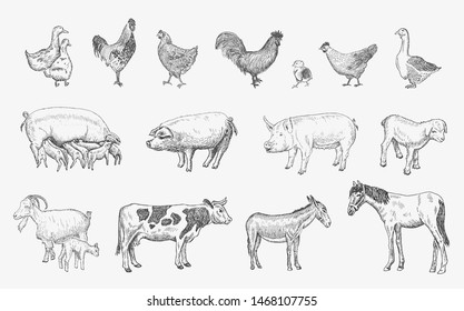 Farm Animals set. Sketches hand drawn illustration background. Flyer, booklet advertising and design. Line art style. Raster copy.