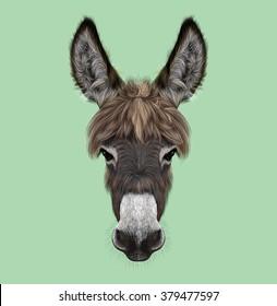 Farm Donkey portrait. Illustrated portrait of brown Donkey on green background.
