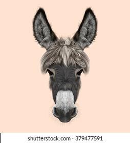 Farm Donkey portrait. Illustrated portrait of grey Donkey on pink background.