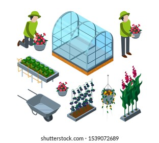 Farm greenhouse isometric. Agricultural wheelbarrow glasshouses for tomato horticulture concept 3d pictures
