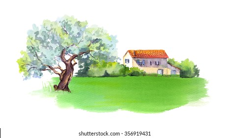 Farm house, olive tree and green field in Provence, France. Watercolor