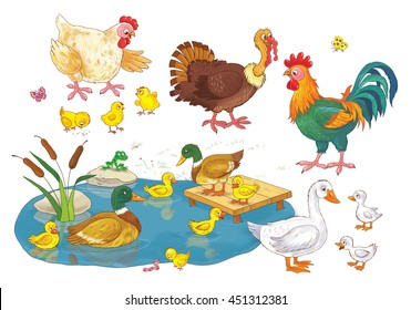 At the farm. Set of domestic birds. Cute hen, rooster, chicks, ducks, ducklings, geese and turkey. Illustration for children. Funny cartoon characters.